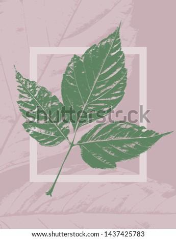 leaf acer negundo scan botany