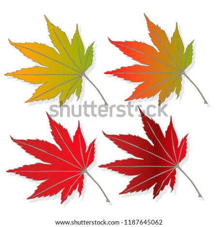 leaf autumn colorful vector illustration set isolated
