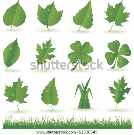Leaf collection - stock vector