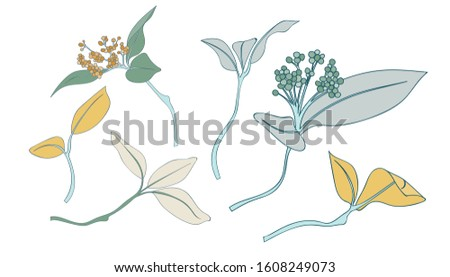 Leaf Collection Botanical Collection Element Vector Pack