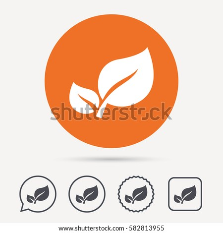 Leaf icon. Fresh organic product symbol. Circle, speech bubble and star buttons. Flat web icons. Vector