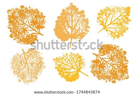 leaf imprints leaves set