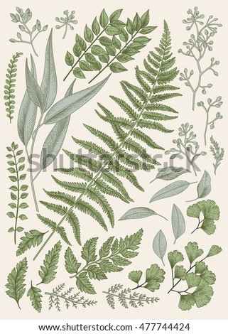 Leaf set. Vintage floral background. Vector design elements. Isolated. Botanical illustration.
