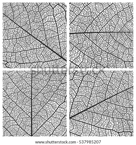 Leaf vector texture pattern background. Black and white design set