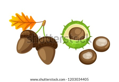 Leaf with pair of acorns and chestnut isolated icons set vector. Foliage of autumnal color, dry frondage, and defoliation. Kernel and peel with spikes