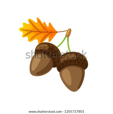 Leaf with pair of hanging acorns isolated icon vector. Autumn symbol of fallen dry tree foliage and defoliation. Seasonal frondage, natural organic