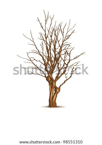 Leafless dry tree, vector illustration, eps10