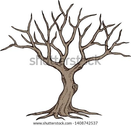 leafless tree  dead tree  dry