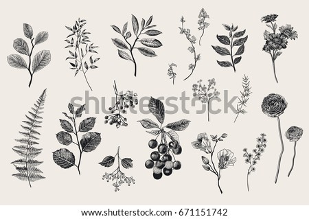 leaves  flowers and berries set