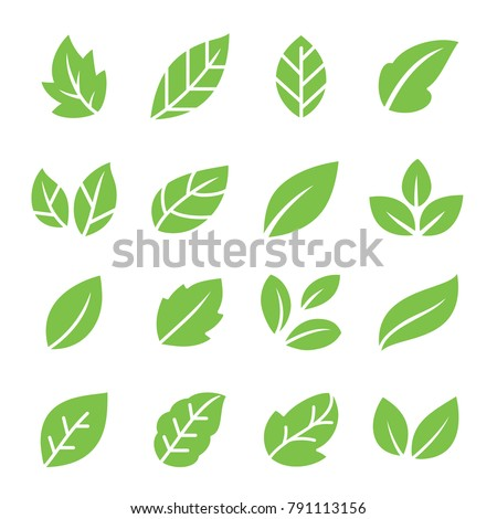 Leaves icon set. Collection of leaf logo design for green, eco, organic, food, beauty, health care brand identity. vector illustration