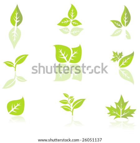 Leaves isolated on a white background