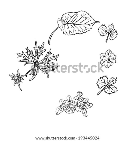 leaves of different shapes