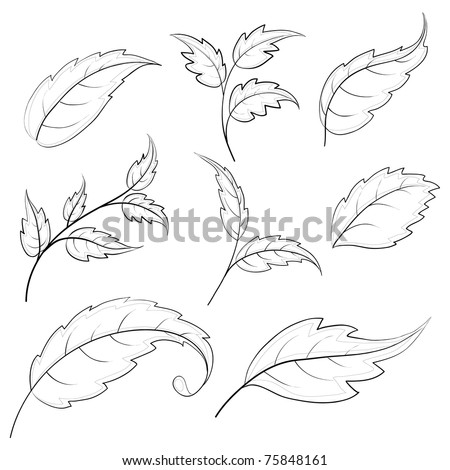 Leaves of various plants, set vector contours on a white background
