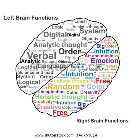 the left and right functions of the human brain Left vs right hemisphere of the brain: which the human brain is a complex and areas of specialization of the left and right hemispheres of the brain.