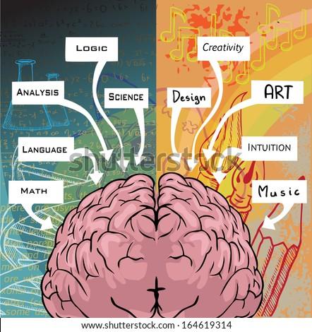 left brain vs right brain research