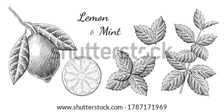 lemon and mint elements in