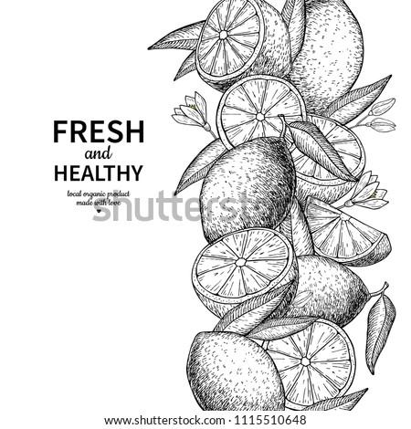 Lemon border vector drawing. Citrus fruit engraved frame template. Hand drawn summer illustration. Vintage label, packaging design concept. Great for tea, juice, natural cosmetics, lemonade