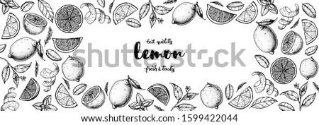 Lemon hand drawn vector illustration. Lemon sketch for design. Black and white style. Citrus lemon pattern illustration. Lemon packaging design.