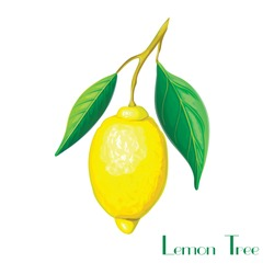 Lemon tree branch with yellow lemon and green leaves isolated on white. Lemon plant illustration. vector hand drawn tropical citrus branch with fruits. realistic lemon on branch. Citron branch sketch
