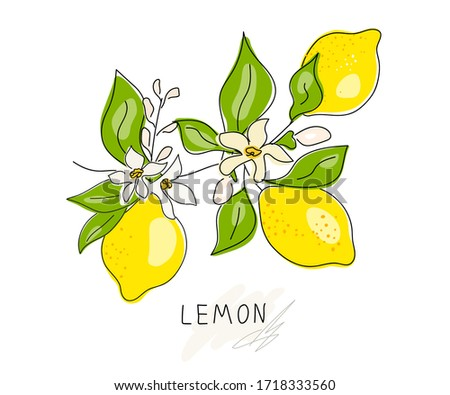 Lemon tree branch with yellow lemon, flowers and green leaves isolated on white. Fresh lemon fruits. Citrus. A whole lemon. Doodle. Minimal style. Bloom. Black line. Vector illustration. Handwriting.