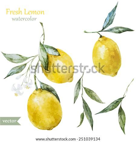 lemon, watercolor , fruit, , painting
