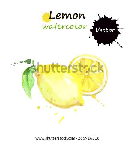 lemon  watercolor painting on