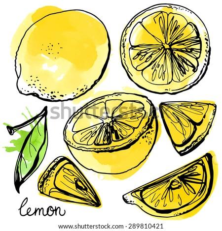 lemons black line drawn on a
