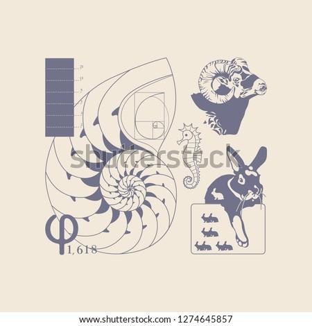 Leonardo Fibonacci on the laws of nature