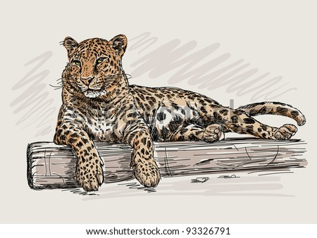 Leopard - stock vector