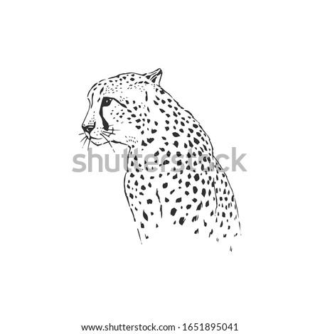 leopard hand drawn inky sketch