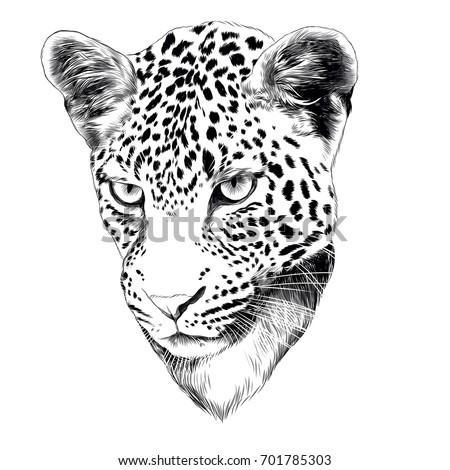 leopard head drawing sketch