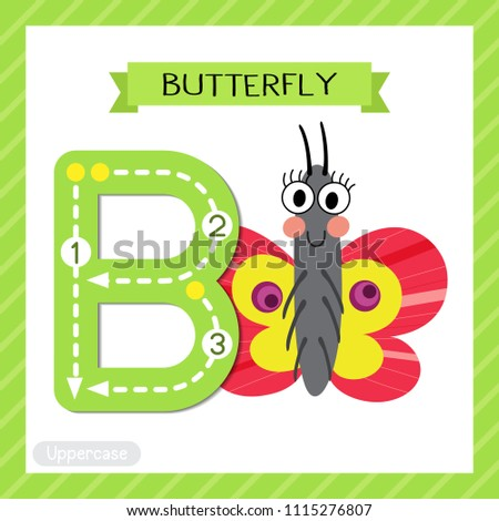 Letter B uppercase cute children colorful zoo and animals ABC alphabet tracing flashcard of Butterfly for kids learning English vocabulary and handwriting vector illustration.