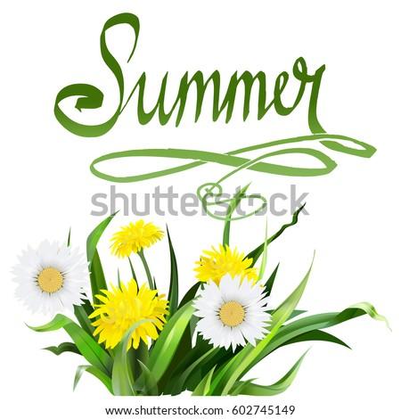lettering summer Chamomile herb, dandelion, vector