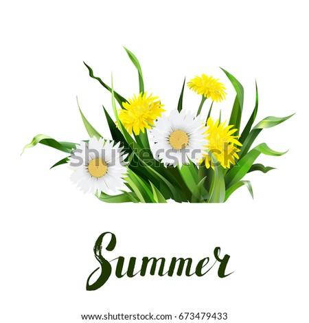 lettering summer Chamomile herb, dandelion, vector Calligraphy lettering