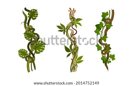 liana as long stemmed woody