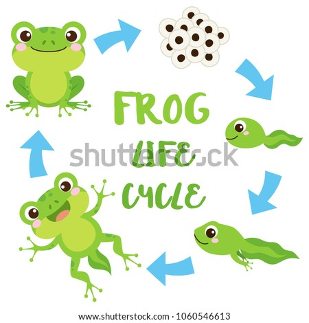 life cycle of a frog cute