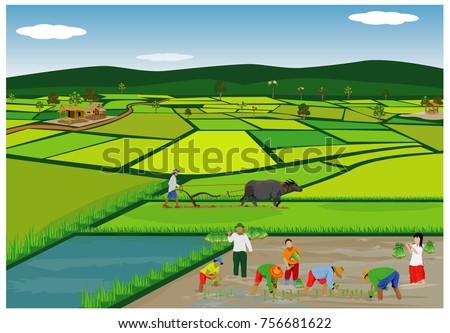 lifestyle of farmer vector