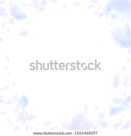 Light blue flower petals falling down. Alluring romantic flowers vignette. Flying petal on white square background. Love, romance concept. Creative wedding invitation.