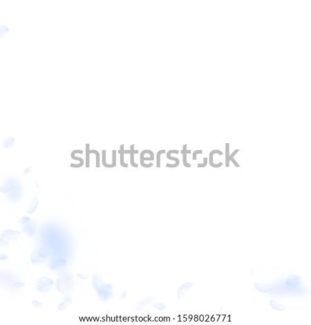 Light blue flower petals falling down. Creative romantic flowers corner. Flying petal on white square background. Love, romance concept. Admirable wedding invitation.