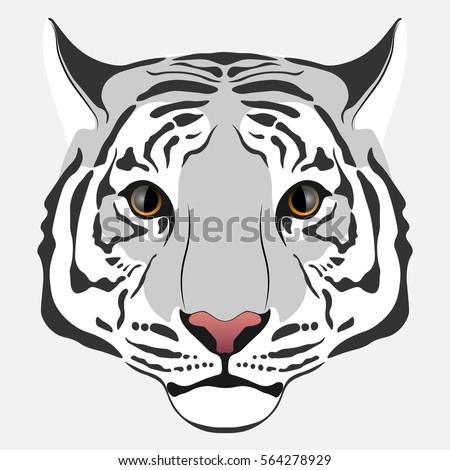 light gray tiger