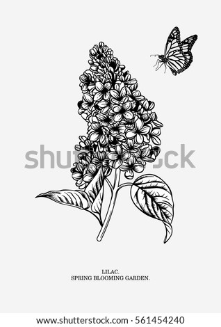 lilac branch floral background