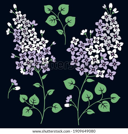 lilac flowers isolated on a