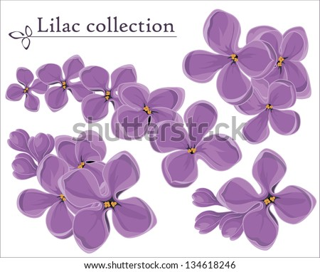 lilac vector collection