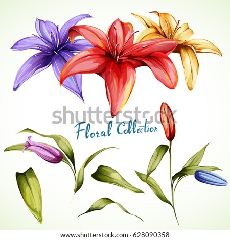 lilly illustration. set of...