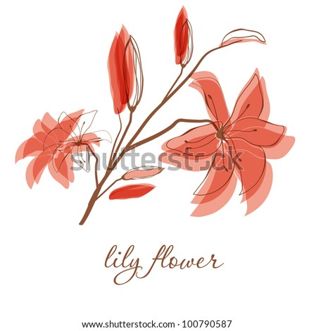 Lily flower on white background. Vector background for your design