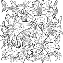 Lily flowers. Line art drawing.  Coloring page
