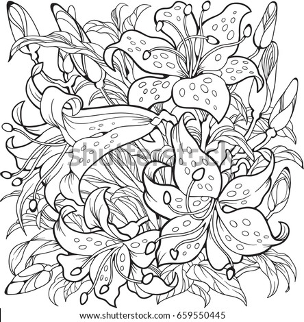 lily flowers line art drawing
