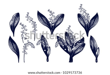 Lily of the valley big set. Hand drawn Isolated vector. Botanical illustration. Universal templates for invitation or packaging. Engraving