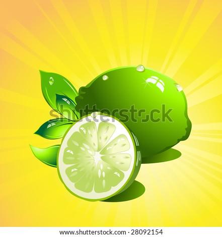 Lime citrus fruit. Vector