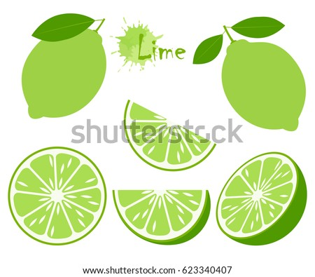 lime with green leaves  slice